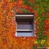 Autumn Sigma Zanzariera Autunno